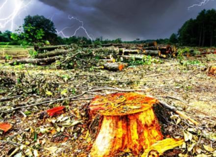 Хто знищив ліси Західної України?