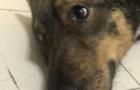 У Мукачеві нелюд знущався над собакою. Довелося втрутитися поліції