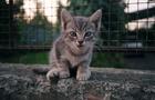 Ужгородці подали петицію щодо вуличних котів
