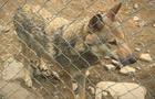 Чи дійсно знущаються з тварин в екопарку на Міжгірщині