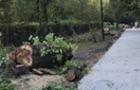 """В Ужгороді вирубали алею дерев біля озера """"Кірпічка"""""""