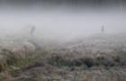 Закарпатські лісівники запрошують жителів послухати шлюбний рев оленів
