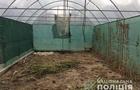 За вирощування коноплі мукачівця засудили на 9 років