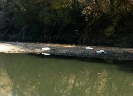 На околиці Ужгорода невідомий застрелив 5 свійських гусей