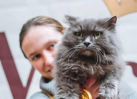 В Ужгороді відбулася виставка-конкурс кішок Міс-кіс 2018 (фото, відео)