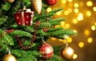 Стала відома вартість новорічних ялинок для закарпатців (ІНФОГРАФІКА)
