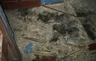 На Закарпатті у двір приватного будинку кинули гранату