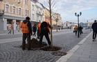 На площі Шандора Петефі в Ужгороді висадили дерева
