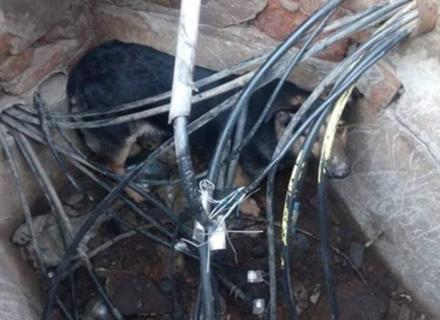 В Ужгороді рятувальники витягували собаку з ями