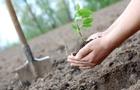 Акція: Лісівники Закарпаття закликали закарпатців разом висадити дерева