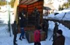 Ведмеді з Донеччини прибули на Закарпаття в жахливому стані