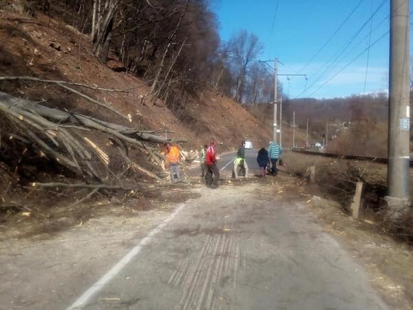 НП на дорозі між Ужгородом та Перечином: Дерево впало на проїжджу частину та обірвало електропроводи (ФОТО), фото-3