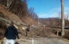 Перед Перечином дерево впало на дорогу і обірвало електропроводи (ФОТО)