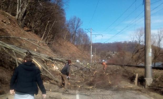 НП на дорозі між Ужгородом та Перечином: Дерево впало на проїжджу частину та обірвало електропроводи (ФОТО), фото-1