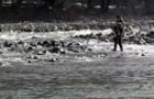 В Усть-Чорній чоловік врятував собаку, який просидів три дні на острові посеред річки