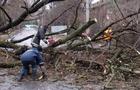 Рятувальники Закарпаття розповіли, як буревій валив дерева, які падали і на дороги та навіть газопровід