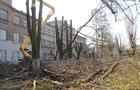 В Ужгороді знову спотворили дерева глибоким кронуванням