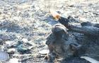Закарпатські рятувальники показали фотографії обгорілих тварин після спалювання людьми сухостою (ФОТО)