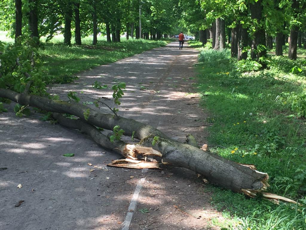 В Ужгороді вiд пориву вiтру впало дерево (ФОТО), фото-1
