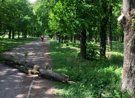 У Боздоському парку Ужгорода велика гілка впала на пішохідну зону