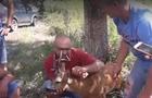 На Тячівщині люди рятували козулю, яка потрапила в ДТП (ВІДЕО)