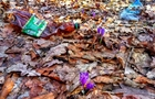 Відпочивальники загадили Шафранову долину на Свалявщині