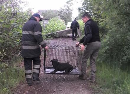 Рятувальники в Мукачеві витягли живим собаку з колектора, куди її кинув у мішку господар