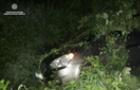 Поліцейське відео: На Мукачівщині п`яний водій тікав від патрульних і злетів у кювет