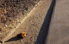 У Мукачеві відрізану голову собаки кинули біля дороги поруч з автостанцією