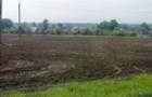На Іршавщині маленький хлопчик пішов з поля сам додому і зник