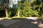 В Ужгороді впало велике дерево і обірвало електричний провід (ФОТО)