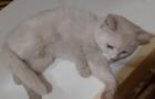 Шаріковщина: На Виноградівщині невідомий вбиває котів