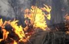 Поблизу Ужгорода горить ліс