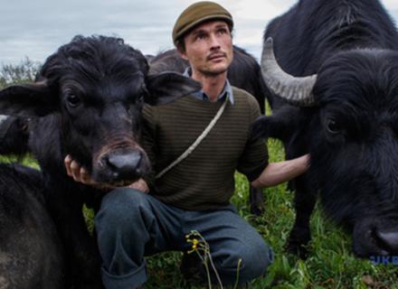 Після столітньої відсутності у Долині нарцисів знову поселилися карпатські буйволи