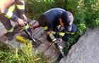 Перечинські рятувальники за допомогою спецзасобів витягли з-під кам'яної брили маленьке кошеня (ФОТО)