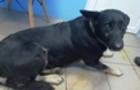В Ужгороді невідомі труять собак