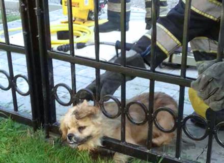 У Хусті рятувальники визволяли застряглого в паркані собаку (ФОТО)