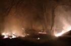 Масштабну пожежу на Берегівщині локалізовано. Вигоріли старі виноградники та чагарники