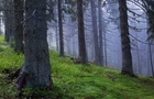 У лісі на Рахівщині за загадкових обставин помер чоловік
