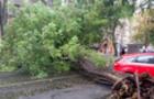 Негода на Закарпатті: Повалені дерева мало не вбили людей