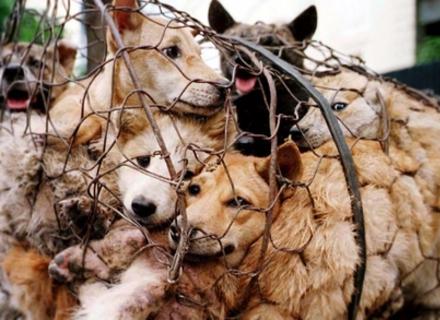 Президент підписав закон про посилення покарання за знущання над тваринами