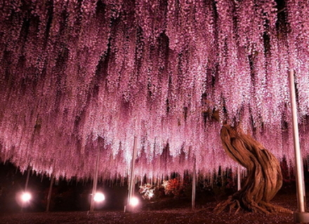 15 найпрекрасніших дерев у світі