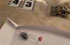 В Ужгороді правоохоронці викрили групу неповнолітніх «закладчиків» наркотичних речовин, які збували їх через мобільний месенджер