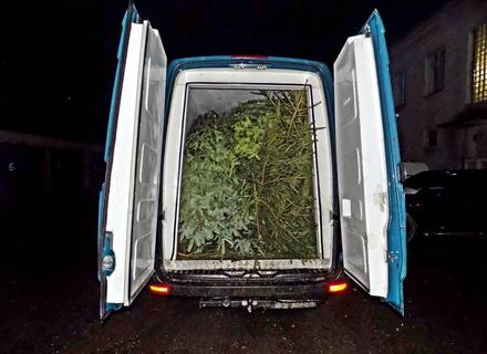 На Міжгірщині правоохоронці зупинили два мікроавтобуси в яких було 200 ялинок