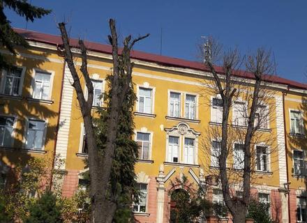 В Ужгороді через неправильну обрізку загинули дерева