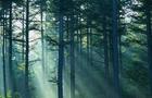 На Мукачівщині загинув браконьєр. На нього впало дерево, яке він спиляв