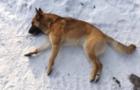 На Ужгородщині чоловік просто так застрелив собаку