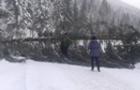 На Синевирському перевалі на дорогу впала величезна смерека і перекрила рух (ФОТО)
