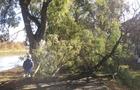 В Ужгороді сильний вітер у кількох місцях повалив дерева (ФОТО)