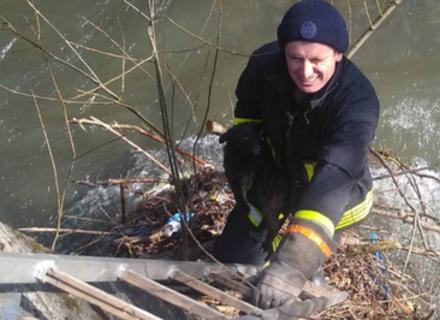 Воловецькі рятувальники визволили цуценя з купи річкового сміття